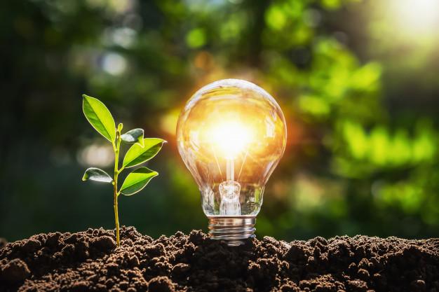 Copygreen: uma empresa que preza pela sustentabilidade